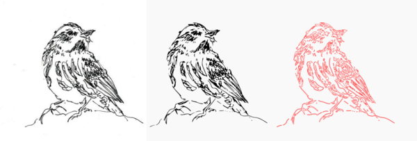Bird pencil trace.png