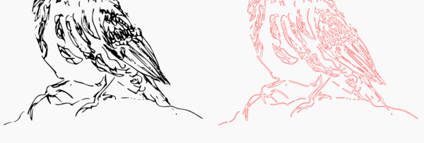 Bird pencil trace detail.png