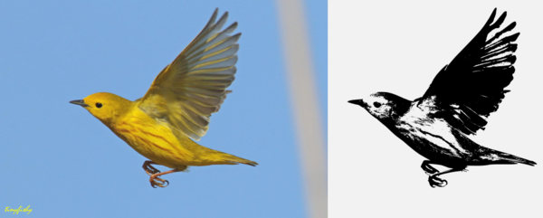 Yellow bird contrast.png
